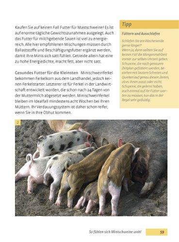 Minischweine: Haltung, Pflege, Erziehung - 7