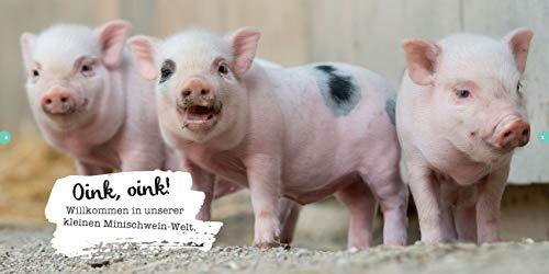 Quietschsüße Minischweine: Die lustige Welt der Mini-Pigs im einzigartigen Fan-Buch - 3