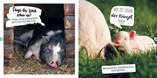 Quietschsüße Minischweine: Die lustige Welt der Mini-Pigs im einzigartigen Fan-Buch - 5