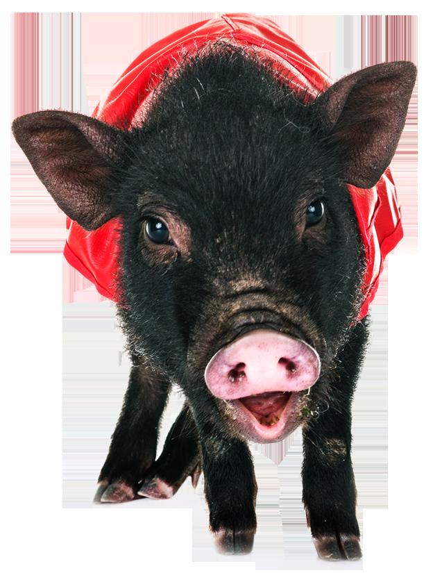 Rund Um Das Schwein Schwein Newsde